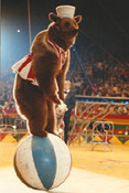 circus-bear-pic2