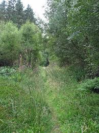 overgrownpath